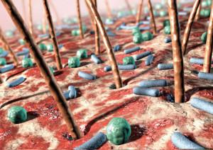 бактерии на коже